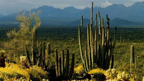 landscape arizona wallpapers and images wallpapers pictures photos