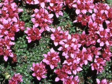 piante invernali con fiori piante da giardino sempreverdi con fiori con piante e