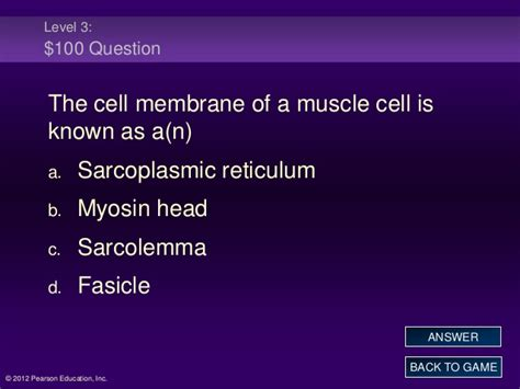 ch  muscle jeopardy review game