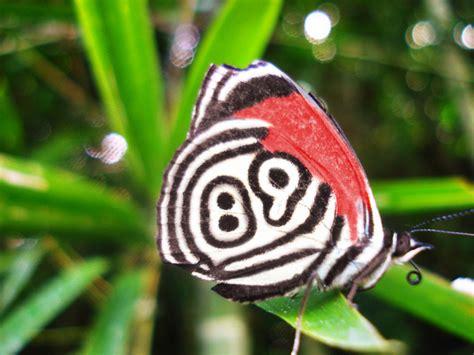 imagenes mas raras de la naturaleza allpe medio ambiente blog medioambiente org la mariposa