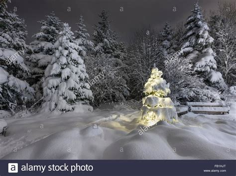 illuminated snow covered christmas tree in forest in