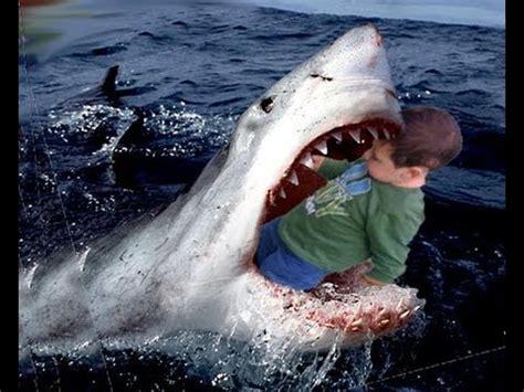 baby shark eating great white sharks eating people weneedfun