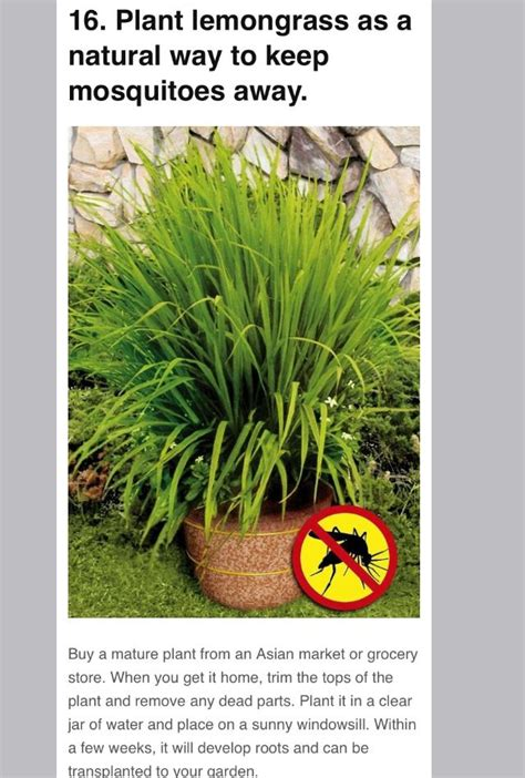 best way to keep mosquitoes away from backyard 100 best images about outside ideas on pinterest gardens
