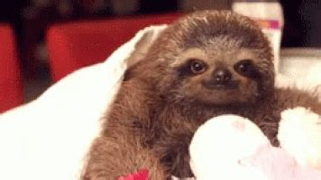 cute baby animals gifs find share  giphy