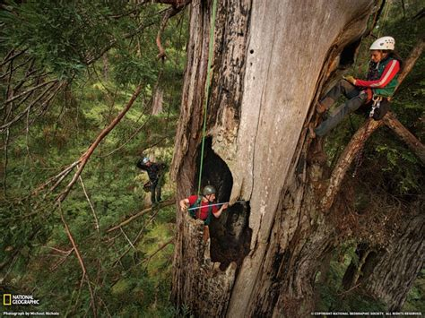 extreme backyard adventures the giant of humboldt redwoods state park usa extreme