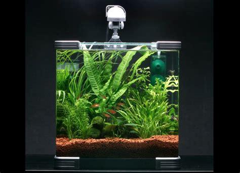 best nano fish tank why nano tanks practical fishkeeping magazine