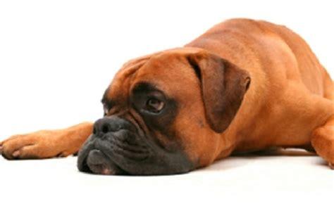 black diarrhea in dogs diarrhea 2