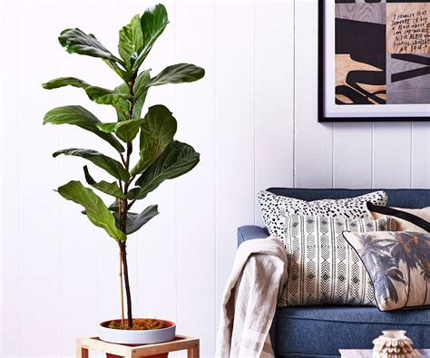 top  indoor plants   busy household
