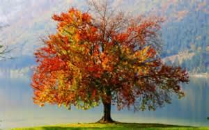 autumn tree painting wallpaper 32642