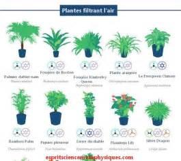 les 25 meilleures id 233 es concernant plante d int 233 rieur sur