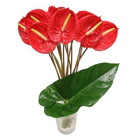anthurium fiori consegna fiori a domicilio omaggi floreali vendita on line