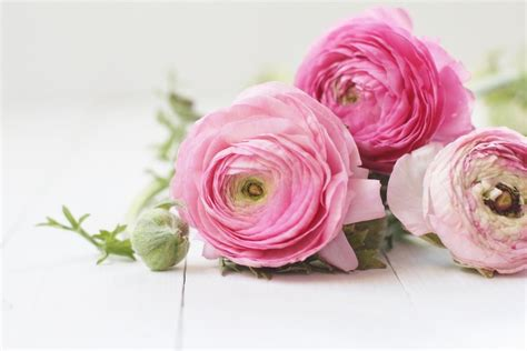 Home Decor Mail Order Catalogs by Simple Beauty Ranunculus Start A Easy Spring Backyard