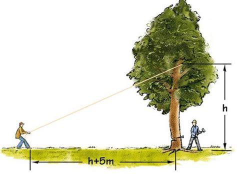 Tannen Selber Ziehen by Baum F 228 Llen Selber Machen Heimwerkermagazin