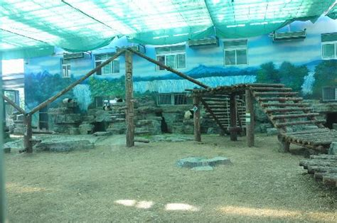 Panda House by Panda House Picture Of Beijing Zoo Beijing Tripadvisor