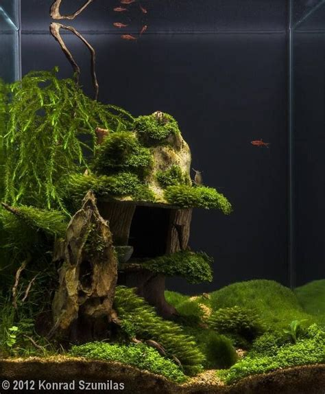 aquascape fish 17 best driftwood aquascapes images on pinterest planted