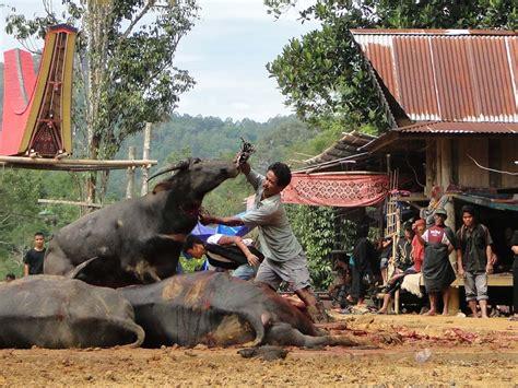 Paket Pesona wisata tana toraja pesona indonesia