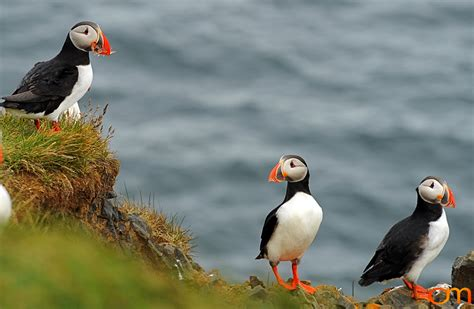 puffins make me happy happy orange world