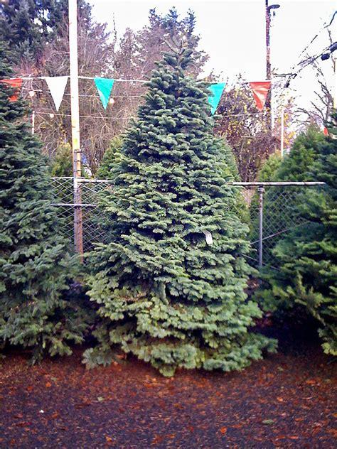 black gold keeping christmas trees fresh black gold