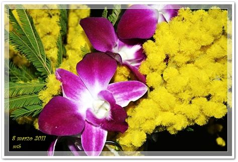 foto 8 marzo fiori marzo 2011 matebi