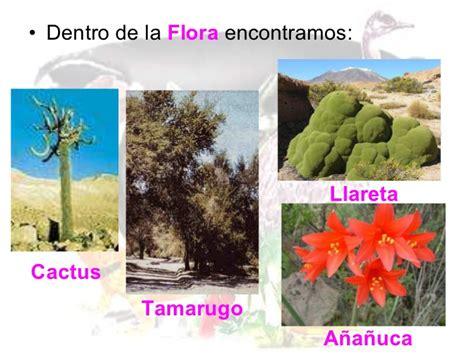 imagenes de flores de la zona norte flora y fauna de chile