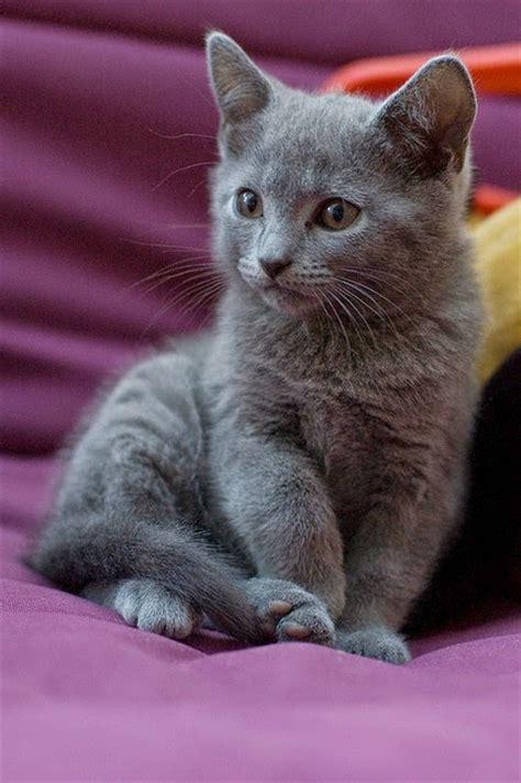 friendliest breeds pet s we top 10 friendliest cat breeds