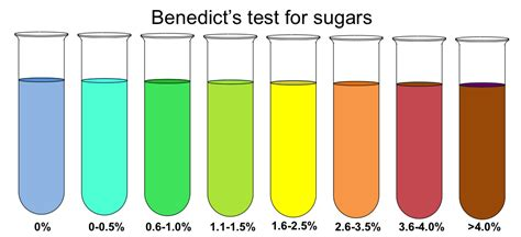 jams testing colors what does the benedict s test show in someone who eats