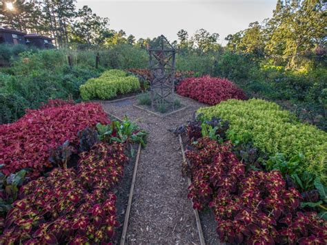 edible landscape design hgtv