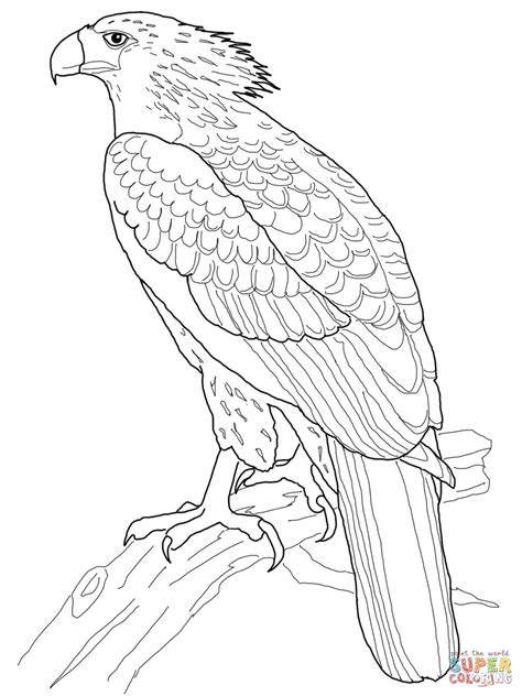 coloring page harpy eagle philippine eagle coloring page free printable coloring pages