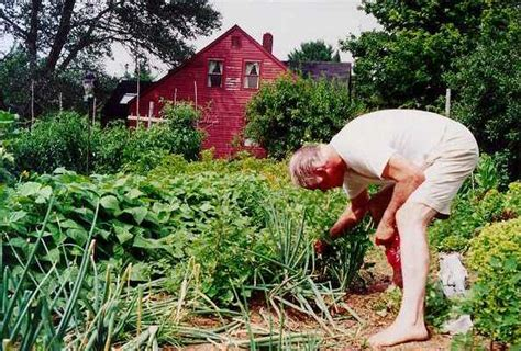 gardening pictures organic gardening pictures of mort mather and his organic farm