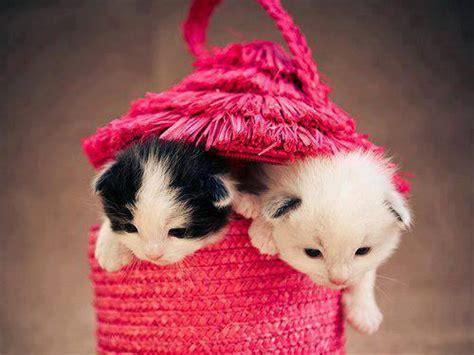 Cat Pink cat kitten image in pink beg