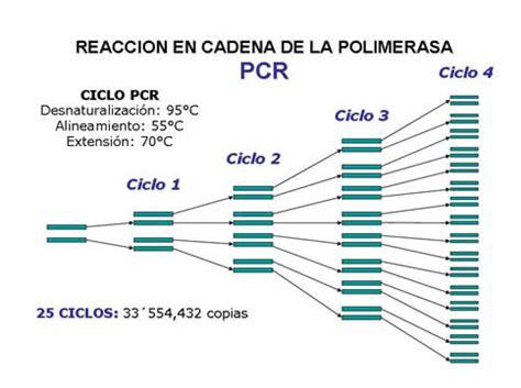 cantidad de cadenas del adn todo sobre medicina forense t 233 cnica pcr eduardo