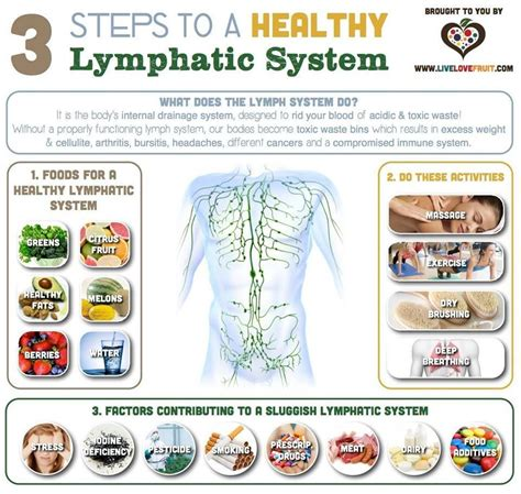 How To Detox Spleen And Liver by The Lymphatic System Has Three Functions 1 Fluid