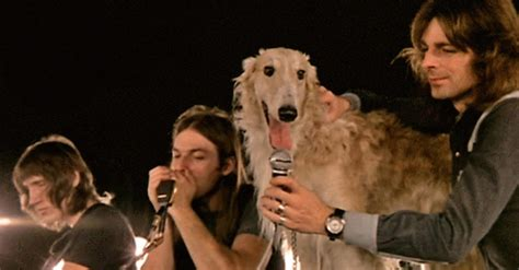 pink floyd dogs why pink floyd is every s favorite band