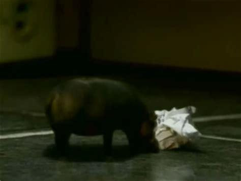 house hippo house hippo wikipedia