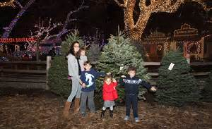orange county california christmas tree farms choose and