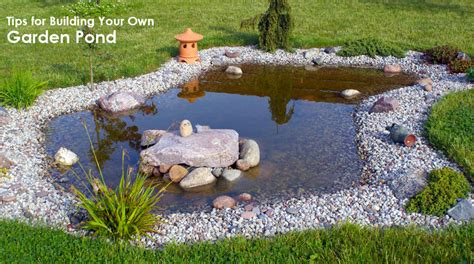 tips for building your own pond dot