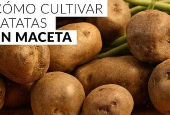 plantadores de patatas c 243 mo cultivar patatas en maceta paperblog