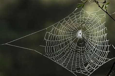spiders web room 5 spider poetry