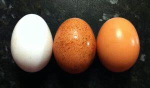 why are eggs different colors pale eggs why egg shell colour can change
