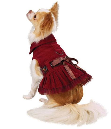 puppy clothing clothes designer clothing small clothes hairstyles