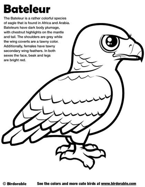 cute eagle coloring pages 1000 images about birdorable coloring pages on pinterest