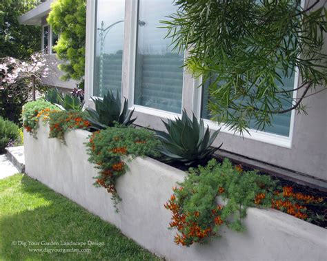 modern landscape and planters with architectural plants greenbrae ca contemporary