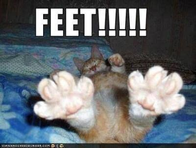 Foot Meme - feet meme cat humor cats funny meme quotes lolcats