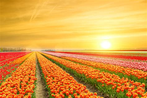 netherlands tulip fields a vivid world top 30 most colorful places on earth lost