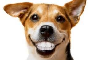 do dogs lose teeth dodogs