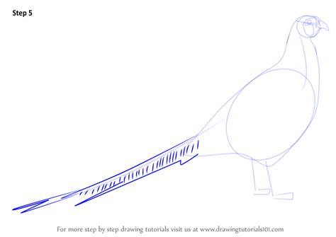 how to a pheasant learn how to draw a common pheasant birds step by step drawing tutorials