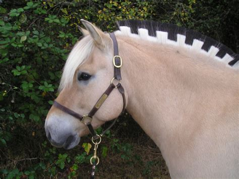 fjord mane designs can i have a pony fjords at the rocky mountain horse