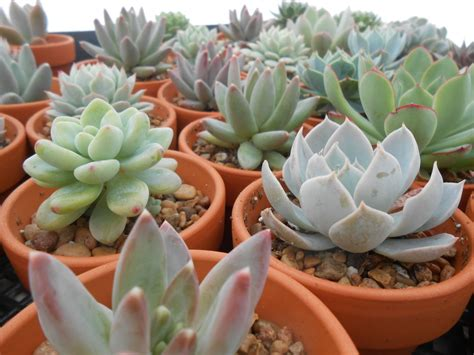 succulents plants how to create and care for your stunning succulent