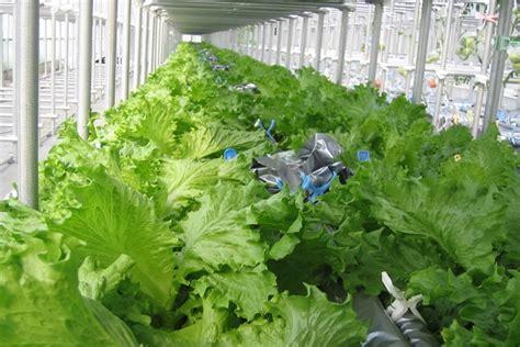 farming  soil  japanese tech  growing