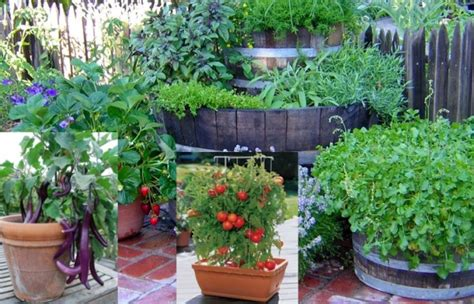 a guide to indoor gardening cnn indoor gardening a beginners guide agri farming